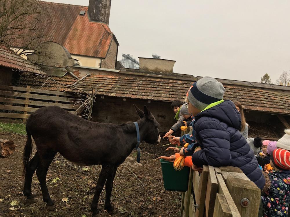 Bauernhof_9.11.2018_10