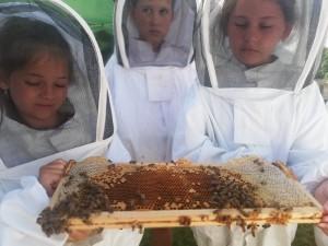 Bienen-WS_3.7.2019_2.+3.Klassen_3